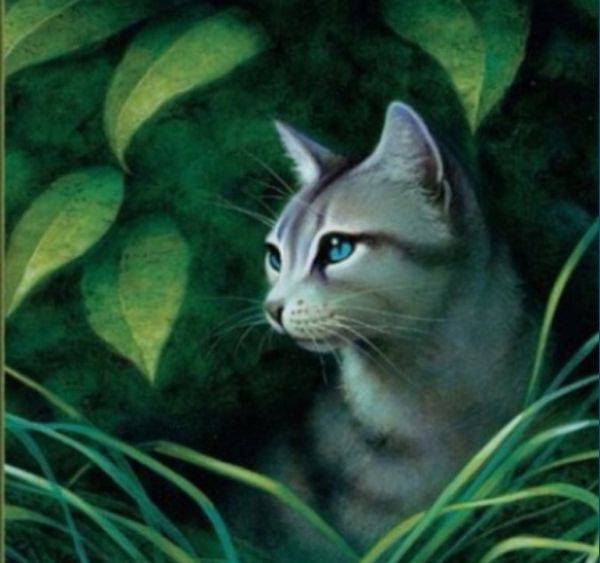 Warriors Erin Hunter Squirrelflight: 17 Best Images About Ivypool And Dovewing On Pinterest