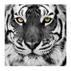 Tigris falikép