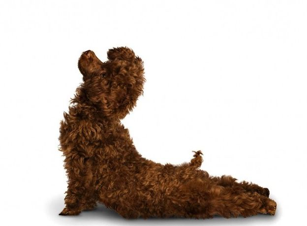 The Pet Spa at Harrods Launch Yoga Classes for You and Your Dog ...