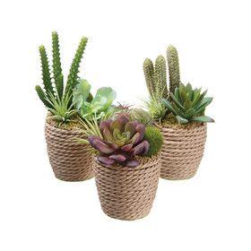 Succulent Finley Garden Desk Top Plant (Set of 3)