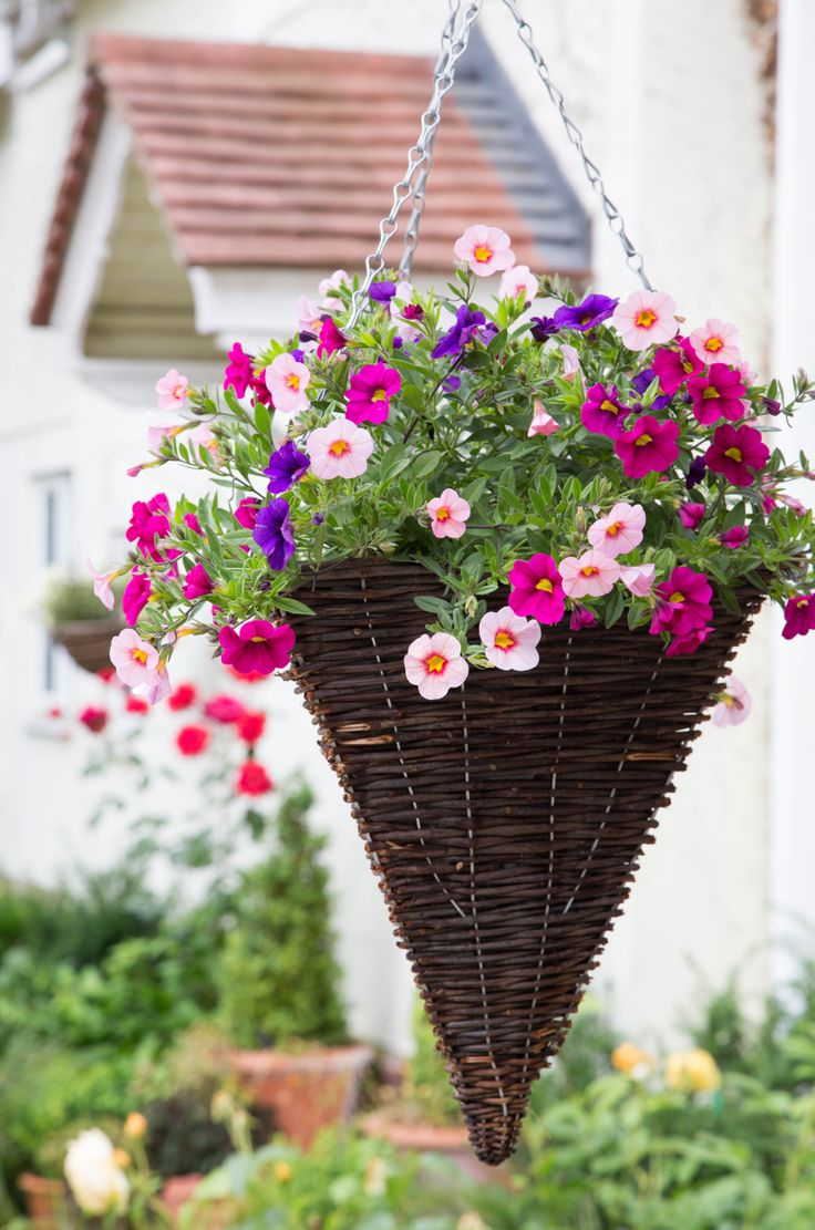 Flower Baskets Photos : Best images about hanging baskets on