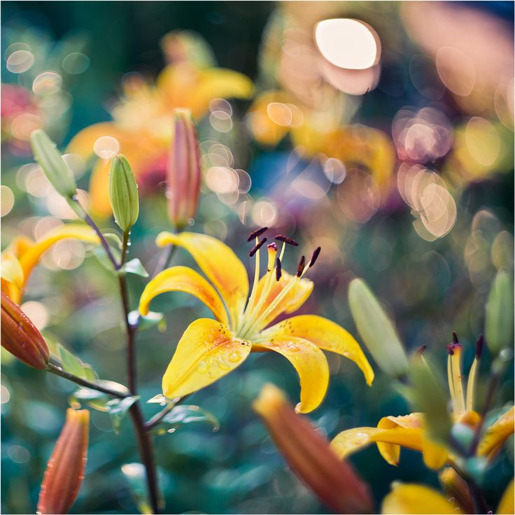 lily by Elena  Khazina on 500px