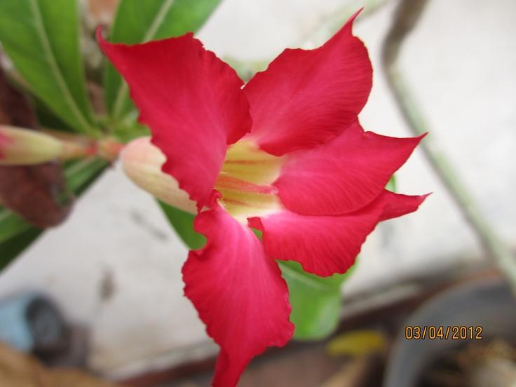 Red Cambodia