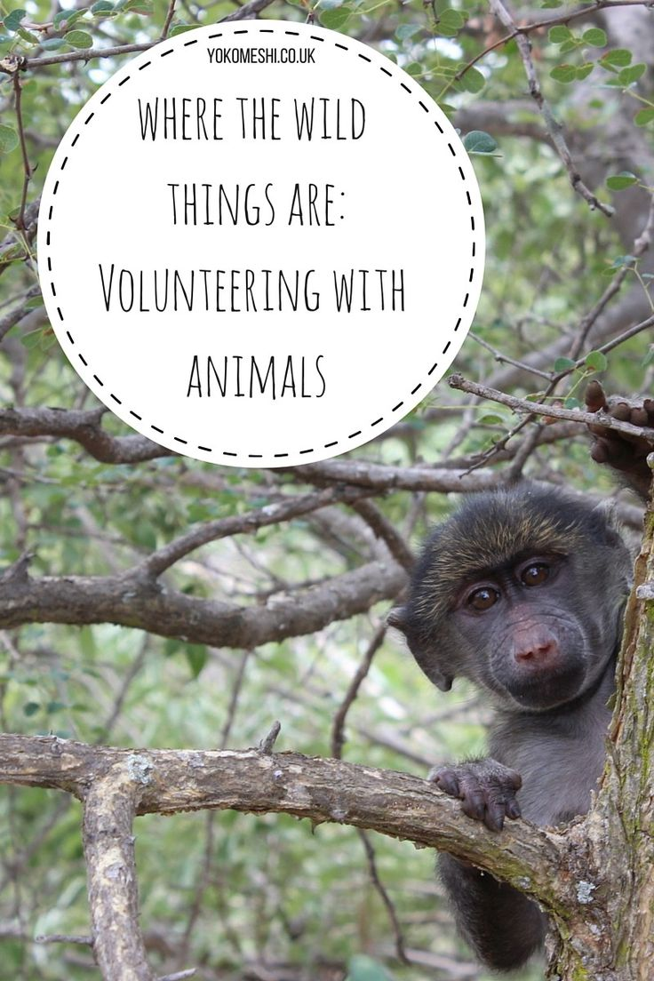 Where the wild things are: Volunteering with animals around the world www.yokomeshi.co.uk