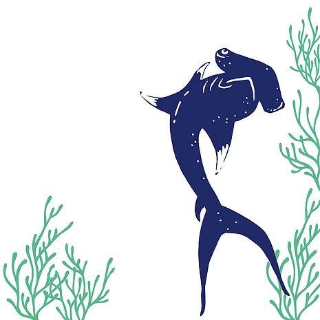 17 meilleures id es propos de requin dessin sur for Comment dessiner un requin marteau