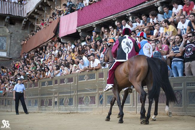 Civetta's jockey enthusing the crowd before the August 2014 Palio race