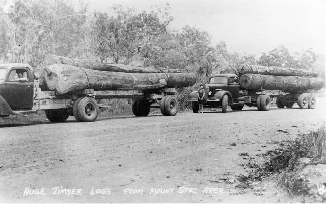Hauling timber logs, Mt Spec area. Townsville Album, NQ Photographic Collection, NQID 4561