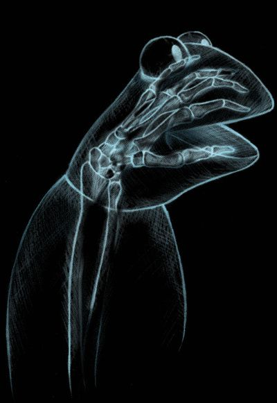 The xray of Kermit the Frog