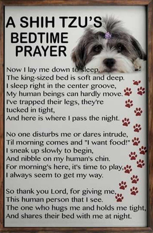 Doggie Heaven Is Where I Will Go Shih Tzu Puppy