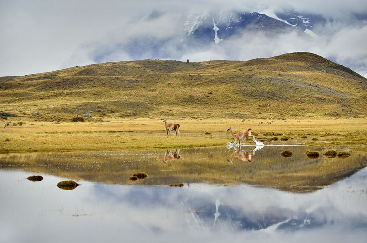 Katsu Tanaka photo of grazing animals on a strip of land, with the mountains and sky reflected in the water in the foreground, shot in Patagonia.