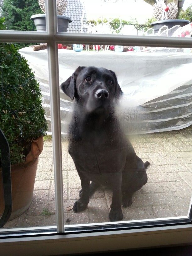 Please let me in.
