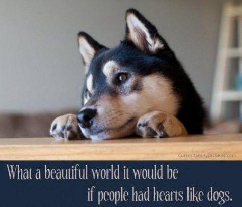 Unconditional love always: Dogs Quotes, Shiba Inu, Pet, Wonder World, So True, Beautiful World, True Stories, Animal, Shibainu
