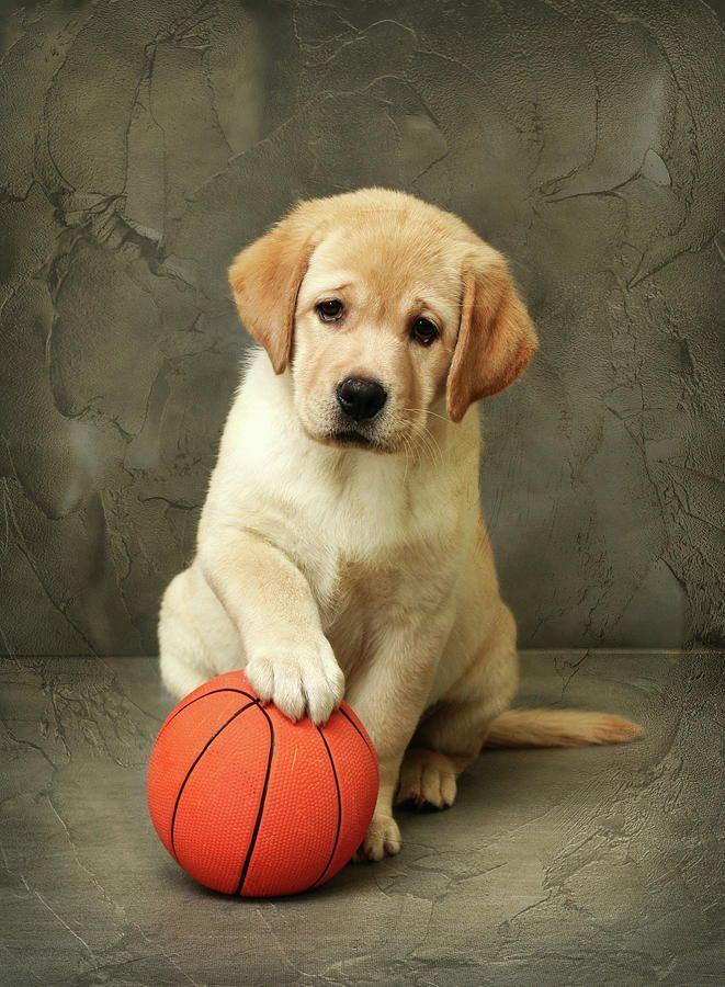 картинка собака с мячиком все близкие