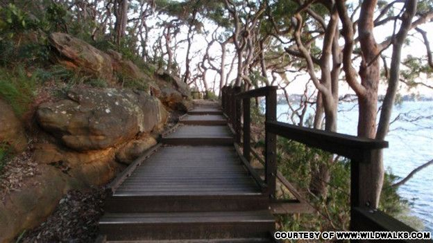 Get out and about. Sydney's best bush walks!
