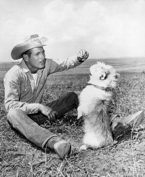 Pictures: Actors & animals