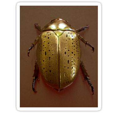Christmas Beetle Sticker by StickerNuts
