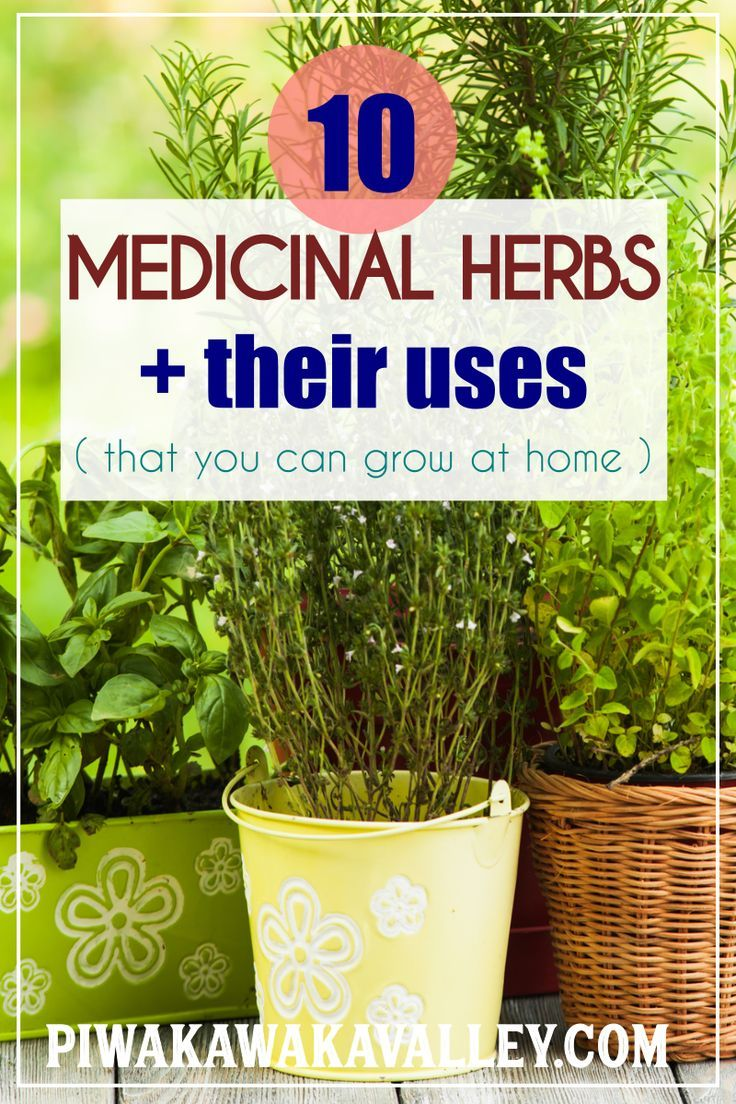 10 Medicinal Plants And Their Uses With Pictures Best Easy To