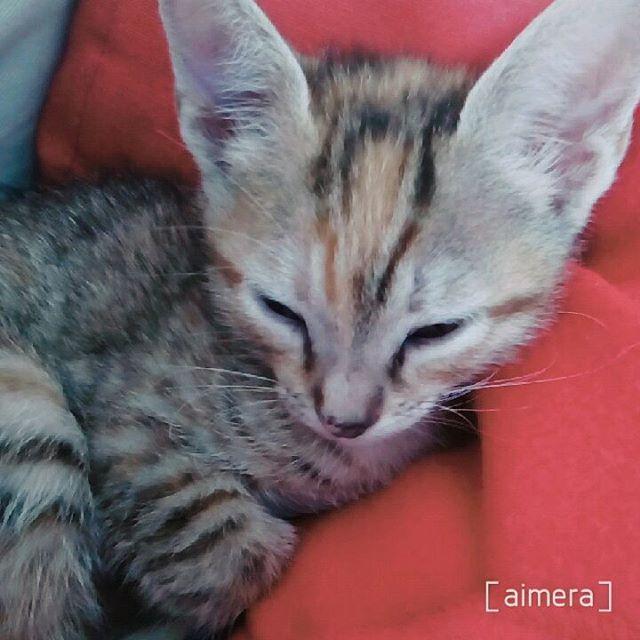 "164 Gostos, 1 Comentários - Bruna Raposo (@brunahh_s2) no Instagram: ""My new baby Cat.... #cat #cats #kitten #kitty #kittens #InstaTags4Likes #catsagram #catstagram…"""