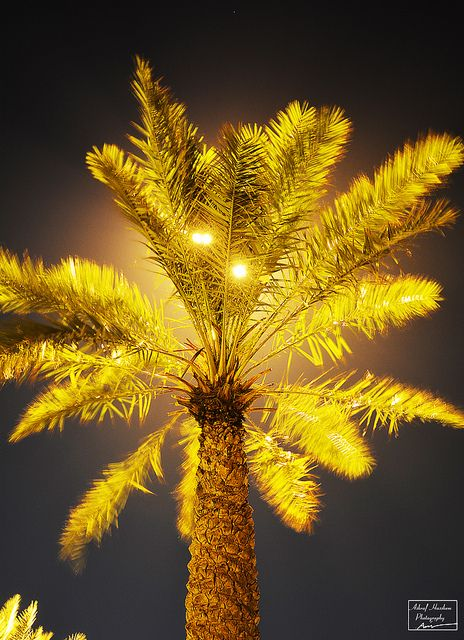 Palm battling the wind