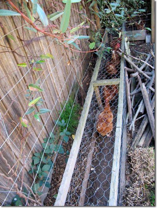 Poulailler en permaculture