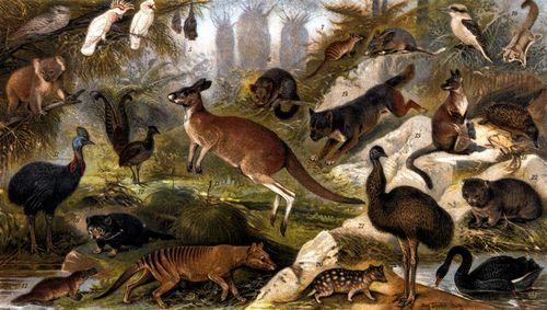 Australische Tierwelt. 1. Eulenschwalm. 2. Koala. 3. Inka-Kakadu. 4. Nasenkakadu. 5. Flederhund. 6. ...
