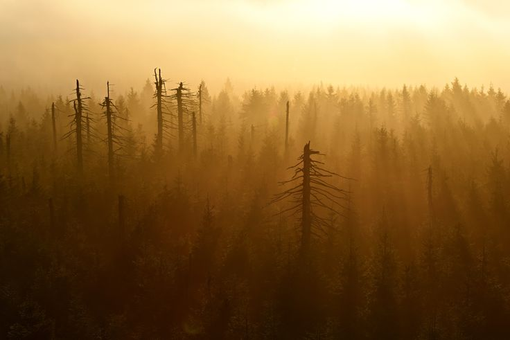 Autumn in Czech Republic by Tomas Mähring on 500px/fototomcz #autumn #fog #forest #morning #trees #lights #sun #sunrise #sunset