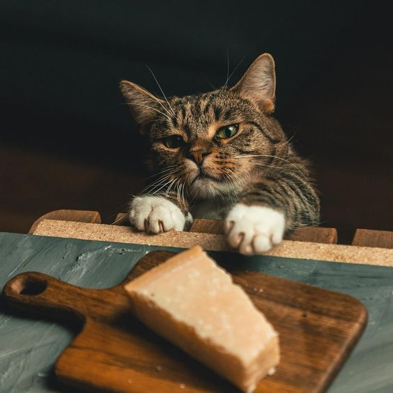 Can Cats Eat Cheese? Is Cheese Safe For Cats? - CatTime | Cat cookies, Cat  post, Cats