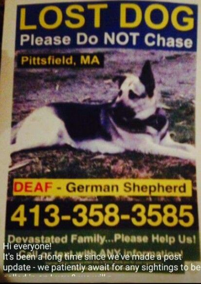 540 best Lost Dogs MA images on Pinterest Lost, Find pets and Girls - lost pet poster