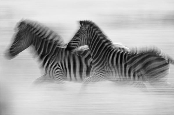 Blurred+Pictures+From+Digital+Camera | In pictures: 30 great examples of motion blur photography