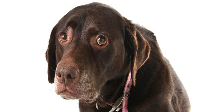 11 Things Humans Do That Dogs Hate - from the Mother Nature Network: