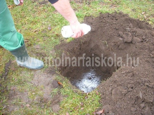 védekezés talajfertőtlenítéssel