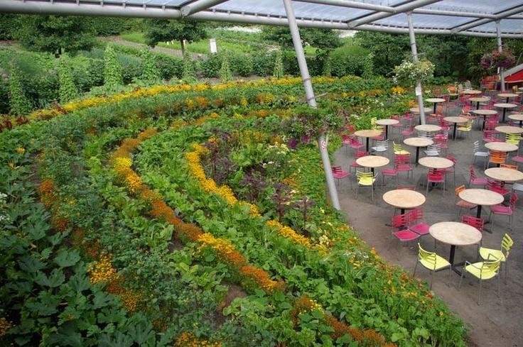 Terrace vegetables edible garden pinterest terrace for Terrace garden meaning