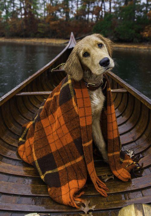 qué monada de perrito con su mantita www.celestianshop.com
