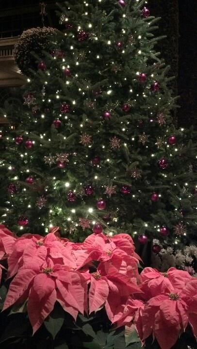 longwood gardens christmas light show - Longwood Gardens Christmas Lights