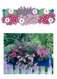 Blumenkasten mit Männertreu, Hänge-Geranien, Angelonie und Hängepetunie