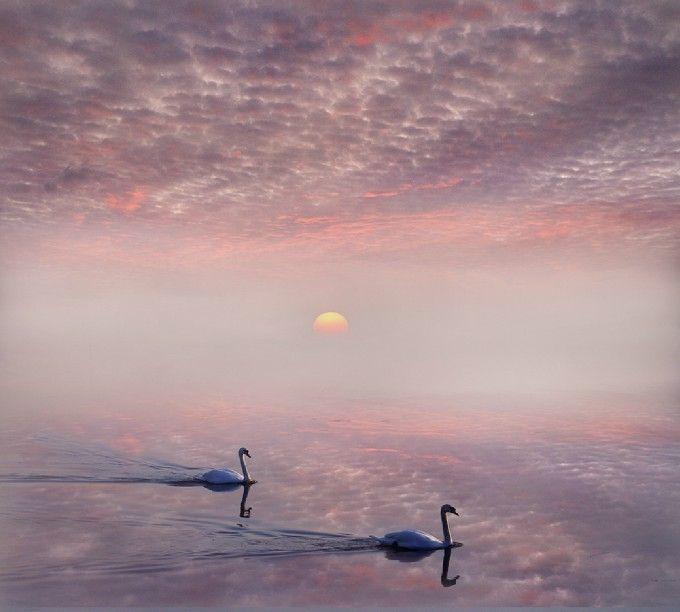 Magical Dawn