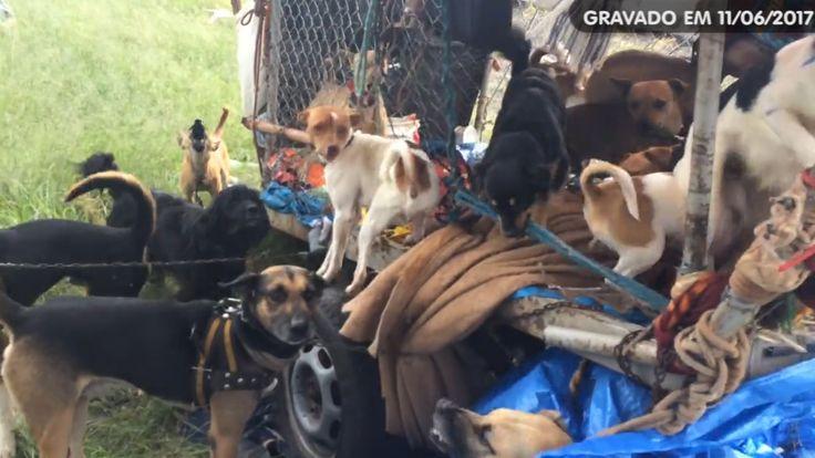 Vídeo flagra maus tratos na Marechal Rondon - https://youtu.be/33qecSc5-fE  Um vídeo postado no Facebook pela protetora de Animais Paula Bik, na manhã desta quinta-feira, dia 11, mostra um caso de maus tratos. Nas imagens é possível ver que um andarilho, conhecido como Zé das Chagas, detém uma espécie de carrocinha com diversos cachorros em - https://acontecebotucatu.com.br/geral/video-flagra-maus-tratos-na-marechal-rondon/