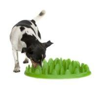 Green Interactive Feeder- Eat Slow