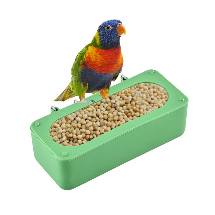 Newest Durable Plastic Bird Feeder Bowl of Water Drinking Device Birdbath Bowl Dove Rectangular Trough Parrot Cup 14.5 * 6 *4cm // FREE Shipping //     Buy one here---> https://thepetscastle.com/newest-durable-plastic-bird-feeder-bowl-of-water-drinking-device-birdbath-bowl-dove-rectangular-trough-parrot-cup-14-5-6-4cm/    #cat #cats #kitten #kitty #kittens #animal #animals #ilovemycat #catoftheday #lovecats #furry  #sleeping #lovekittens #adorable #catlover