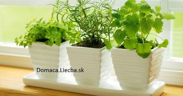 10 rastlín, ktoré priťahujú pozitívnu a odpudzujú negatívnu energiu