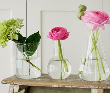 natural history's flower beakers delish!!