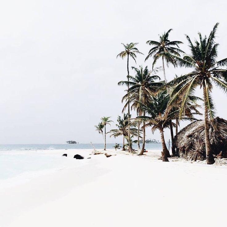 white sand | palm trees
