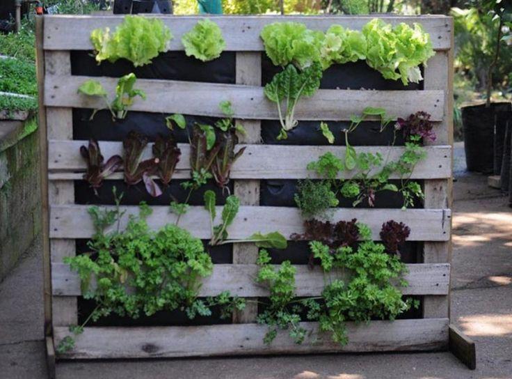Idees De Jardin Potager Vertical De Palette En Bois De Bricolage Pour Le Petit Espace Pour Le Debutant En 2020 Design De Jardin Potager Jardins Potagers Verticaux Jardin Potager