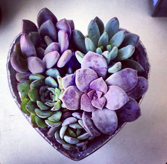 Purple Succulents Heart Shape Flowerpot                                                                                                                                                     More