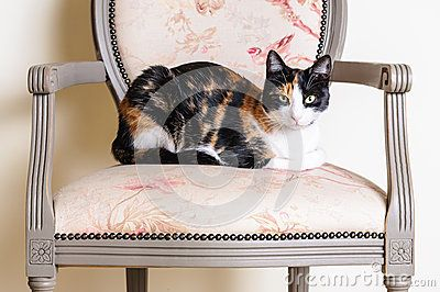 Download Calico Cat On Vintage Chair Portrait Stock Images for free or as low as 0.68 lei. New users enjoy 60% OFF. 22,544,098 high-resolution stock photos and vector illustrations. Image: 38356844