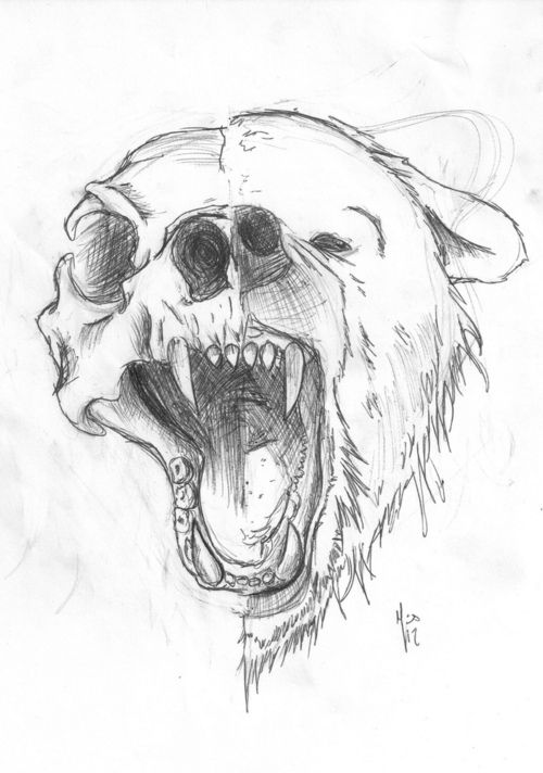 bear sketch | Tumblr Maybe make it a human face with half a skeleton, but put animal fur on the human far part