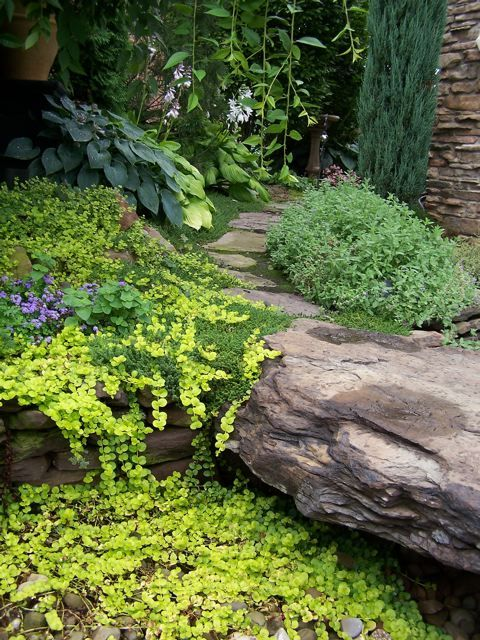 shaded path (hostas in back, love the golden creeping jenny)
