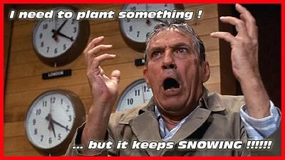 I want to plant something but it wont stop snowing!