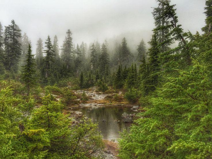 5 Peaks Cypress Mountain Trail Race Recap #racerecap #trailrace #trailrunning