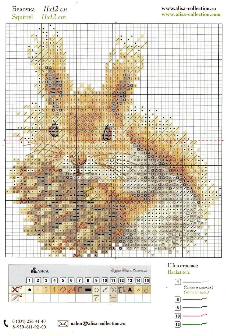 Chart for squirrel